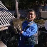 Fish cannon